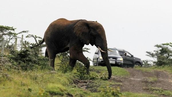 ВИндии бешенный слон растоптал любителя селфи (18+)