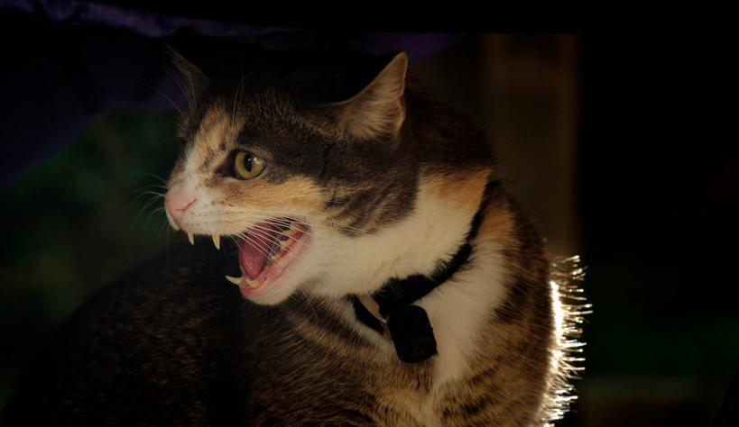 В столице России кошка искусала семью изчетырех человек