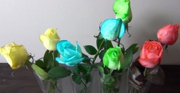 Как сделать синие розы в домашних условиях
