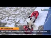 Американец проплыл 200 метров в ледяной воде ради спасения собаки (ВИДЕО)