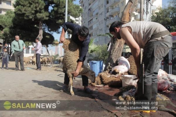 В Баку открылись ярмарки-продажи жертвенных животных