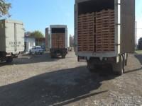 Dərbənddə etiraz edən yük avtomobillərinin sürücüləri arasında azərbaycanlılar da var (VİDEO)