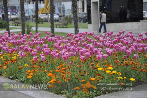 В столице идет подготовка к празднику цветов